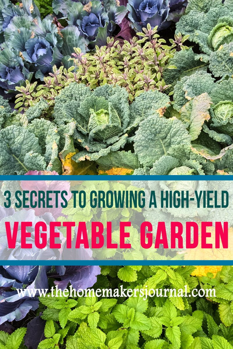 3-Tips-to-grow-a-high-end-vegetable-Garden