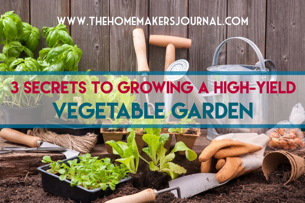 3-Tips-to-grow-a-vegetable-Garden