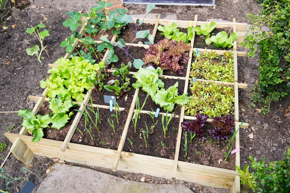 Tips On Planting A Vegetable Garden