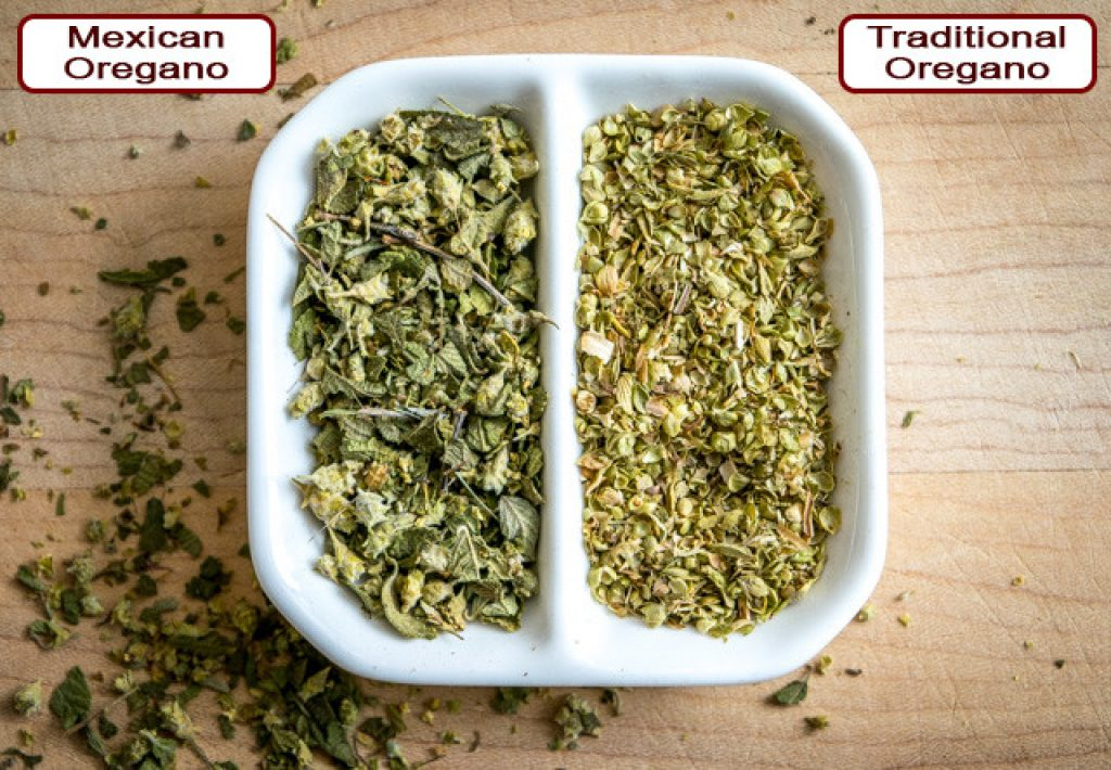 traditional-vs-mexican-oregano