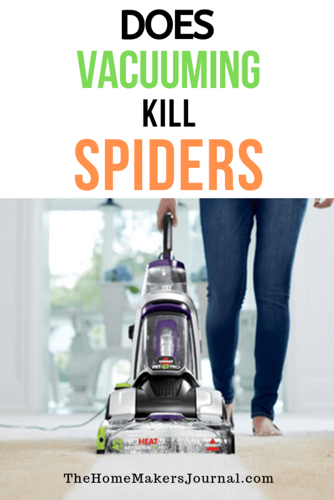 Does Vacuuming Kill Spider