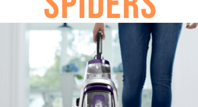 Does Vacuuming Kill Spiders?